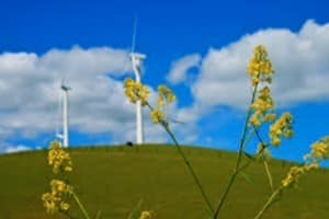 online degree land energy managemment