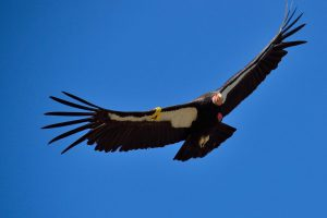 windturbines killing birds
