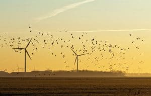 wind turbines killing birds