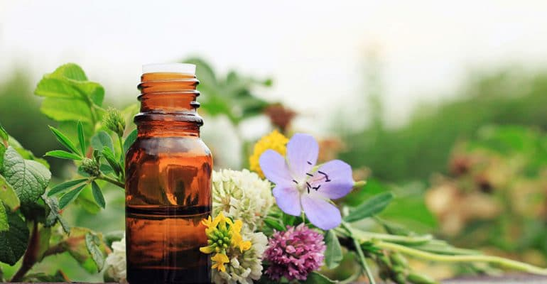 5 Tips for Starting a Career with a Holistic Medicine Degree featured