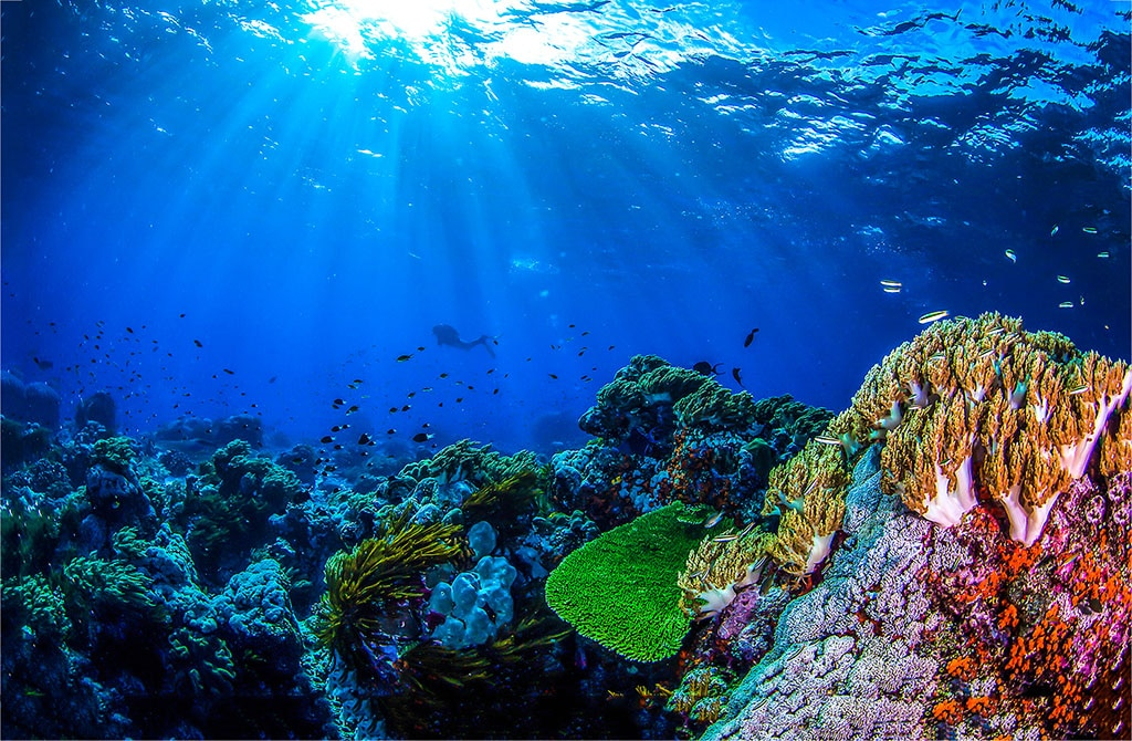 A photo of a colorful coral reef underwater.