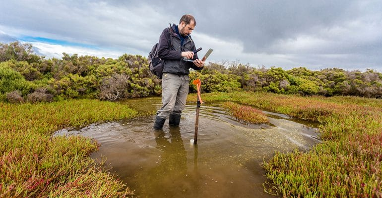 A male marine resource manager collects data while standing in a wetland area.